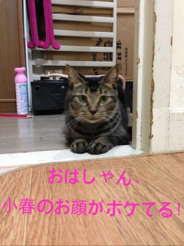 image_201309171258393af.jpg