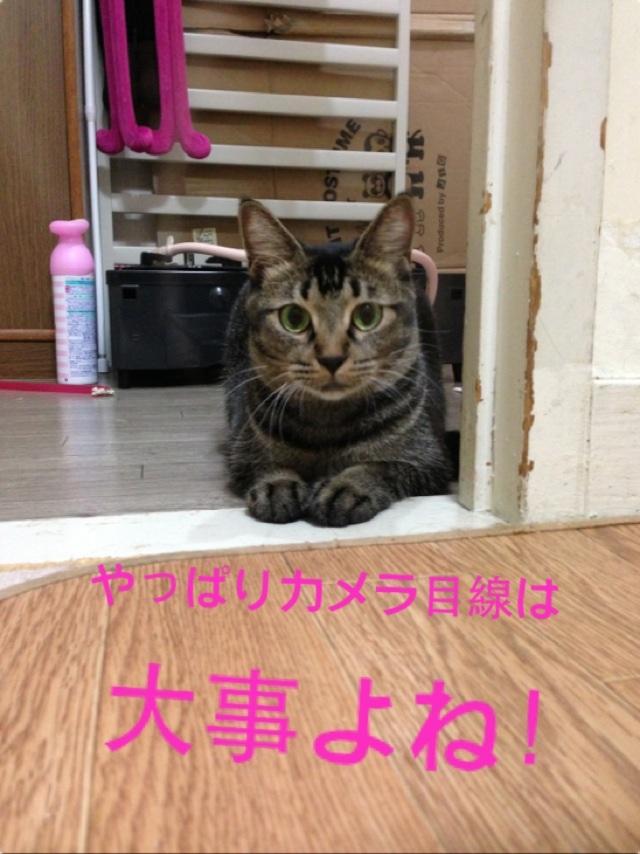 image_20130917125857999.jpg