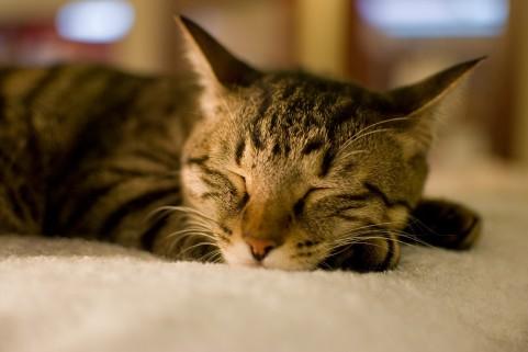 sleep_cat356745.jpg