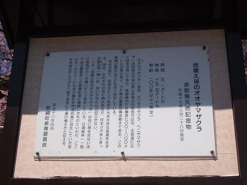 ooyamazakurasetumei.jpg