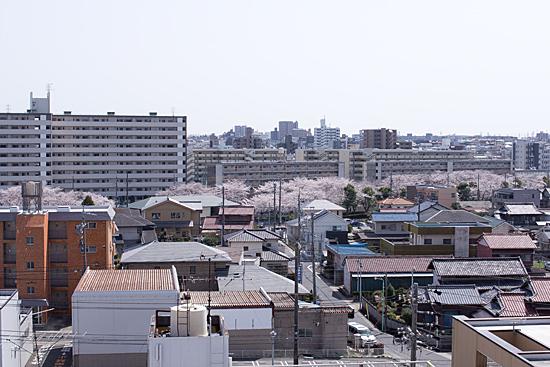 桜思い出-11