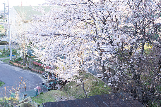 桜思い出-5