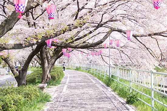桜思い出-9