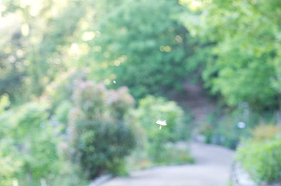 東山植物園1-10
