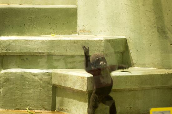 動物園1-1