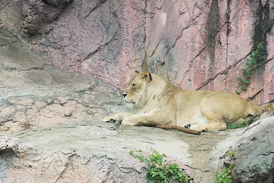 動物園2-5