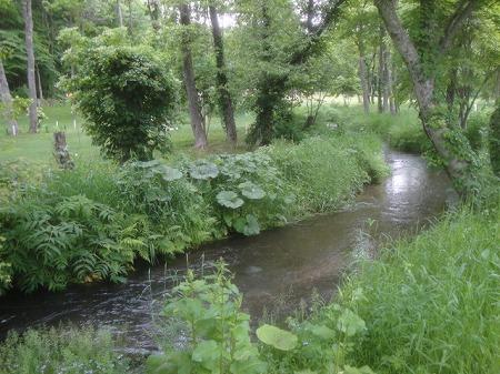 フジパークゴルフ場内を流れる川