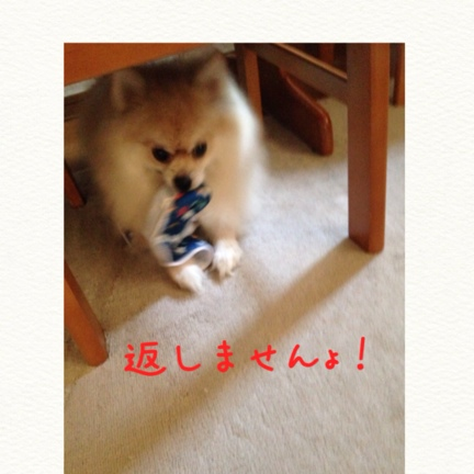 fc2blog_201409171548442b3.jpg