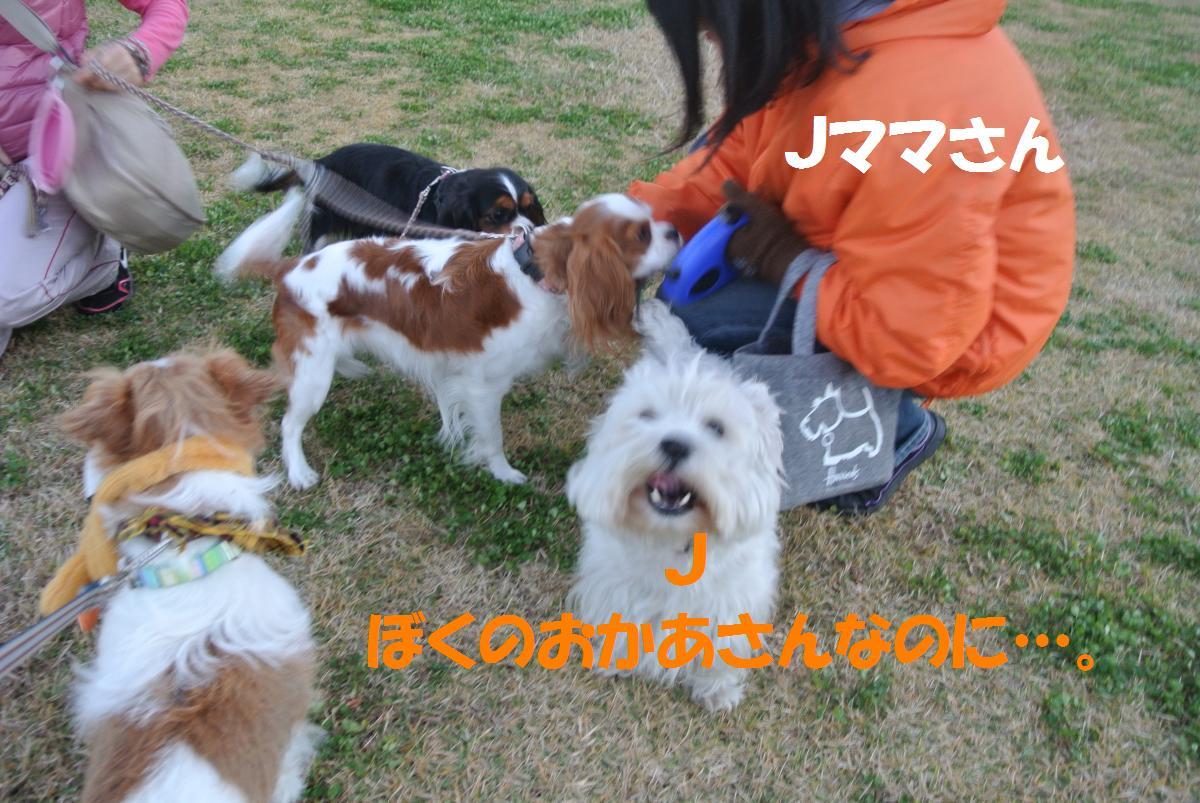 015_convert_20131120143916.jpg