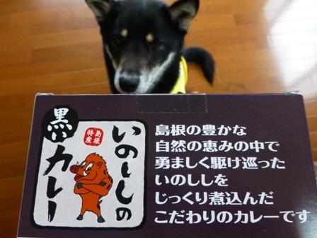いのししの黒いカレー3