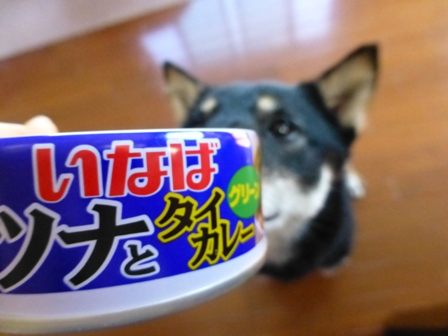 ツナとタイカレー(グリーン)4