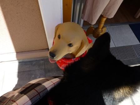 DOG GARDEN CAFE 箕面5