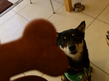 DOG GARDEN CAFE 箕面20