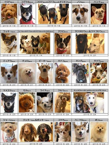 DOG DEPTご来店ワンコ20130523