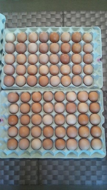 うみたて卵80個1
