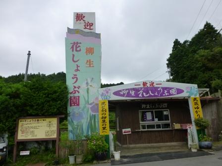 柳生花しょうぶ園8