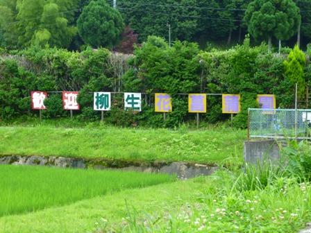 柳生花しょうぶ園11