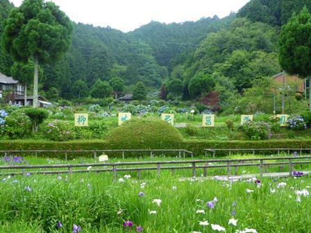 柳生花しょうぶ園13