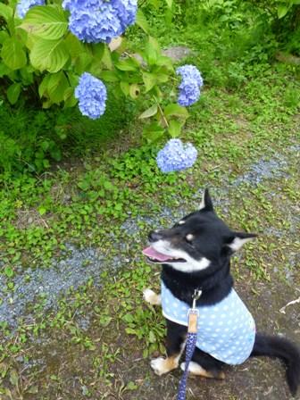 柳生花しょうぶ園21