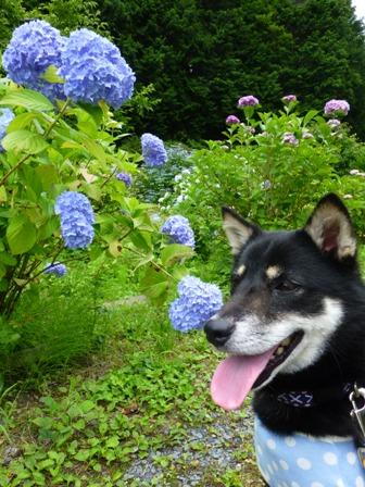 柳生花しょうぶ園22