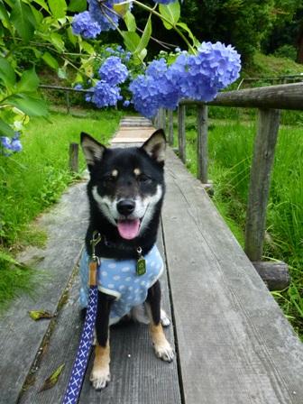 柳生花しょうぶ園24
