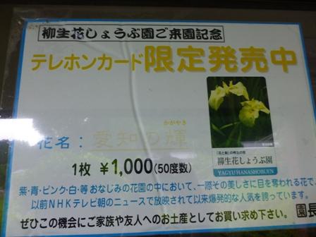 柳生花しょうぶ園28