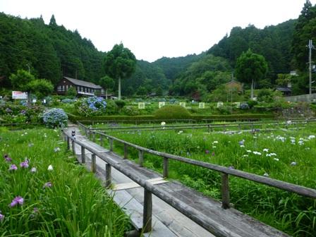 柳生花しょうぶ園31