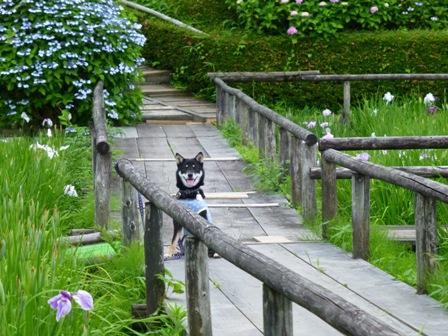 柳生花しょうぶ園32