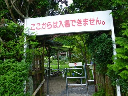 柳生花しょうぶ園35