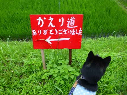 柳生花しょうぶ園36
