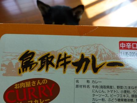 鳥取牛カレー3
