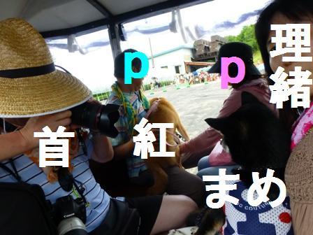 ダイナランドゆり園16