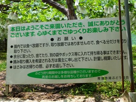 青蓮寺湖観光村ぶどう組合7