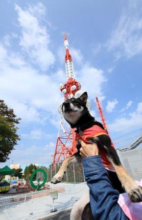 生駒山上遊園地22