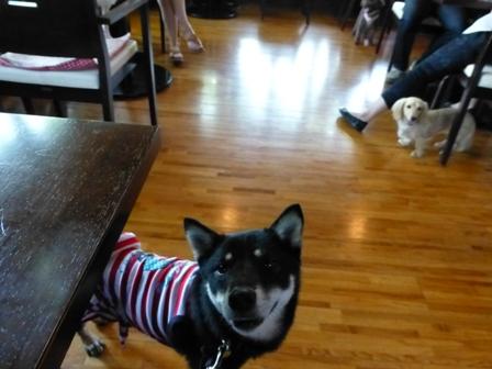 Dog Cafe 楓10