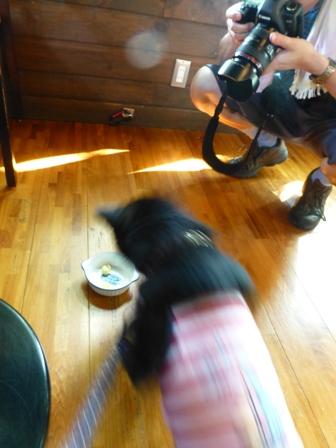 Dog Cafe 楓27