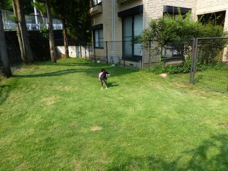 Dog Cafe 楓31