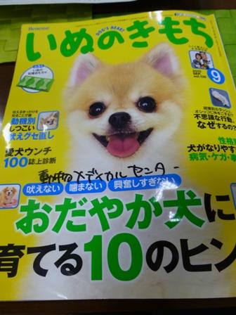 愛犬の床1