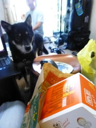 愛犬の床施工2