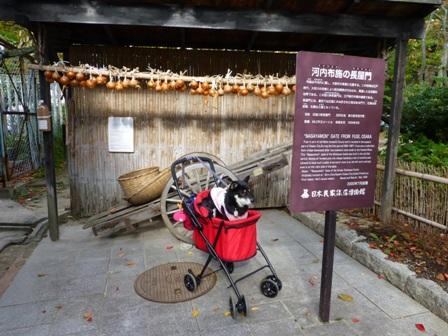 日本民家集落博物館24