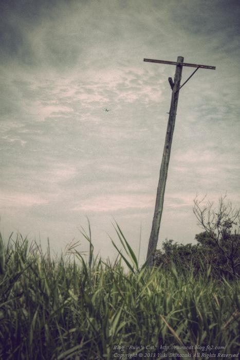 【浸透実験池】 湿地帯に佇む墓標.jpg