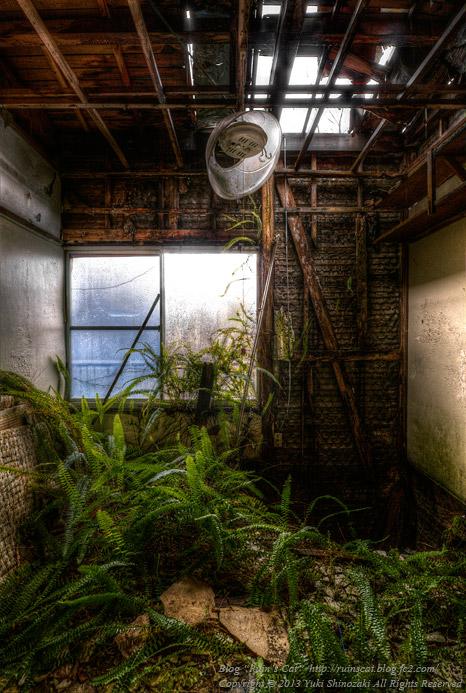 シダ植物で溢れ返る和室 -廃寄宿舎Y(オリジナル物件)-