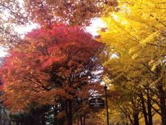 hokudai201311_3.jpg