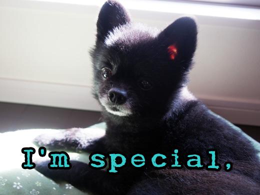 especial.jpg