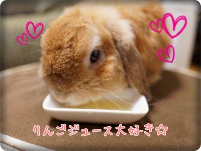 cookieblo1310081.jpg