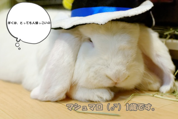mashmallowblog_DxO.jpg