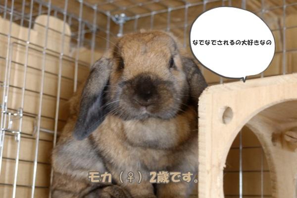 mochablog_DxO.jpg