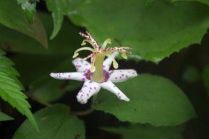 近くに咲いていた花-1