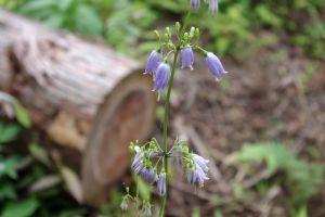 近くに咲いていた花-2
