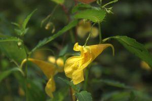 近くに咲いていた花-3